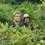 釧路、石狩、札幌、本州からブルーベリー狩り体験!