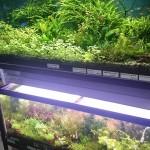 熱帯魚屋が少ない北海道・札幌で「アクアフレンド北水」の価値・・