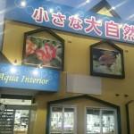 札幌で水草水槽重視の熱帯魚ショップ「小さな大自然の店」について
