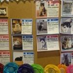 札幌の猫カフェ選び・・・ニャイダーハウスと麻生 猫カフェ 福猫茶房。