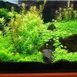 グロッソスティグマとニューラージパールグラス!前景草の成長の早さ競争
