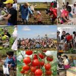 札幌・石狩で家庭菜園に奮闘4年目。野菜作り楽しいよ!
