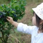 札幌近郊、余市町の観光農園ブルーベリーの丘くりはらの魅力