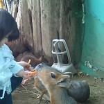 札幌の民営動物園、ノースサファリサッポロが日本一危険?ヤバい?本当は?