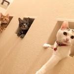 ネコ(猫)と暮らす住宅づくり5事例